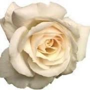 Diana Rose